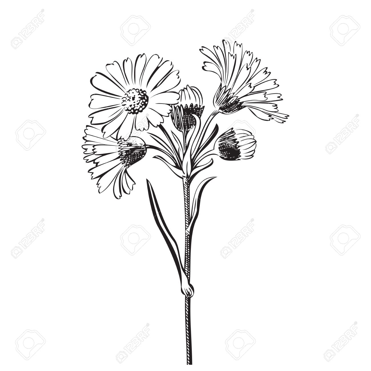 1300x1300 Hand Drawn Bouquet Of Daisy Flowers Isolated On White Background