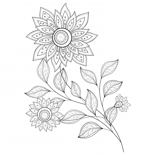 500x500 Advanced Flower Coloring Pages 6 Flower Colors, Flower And Create