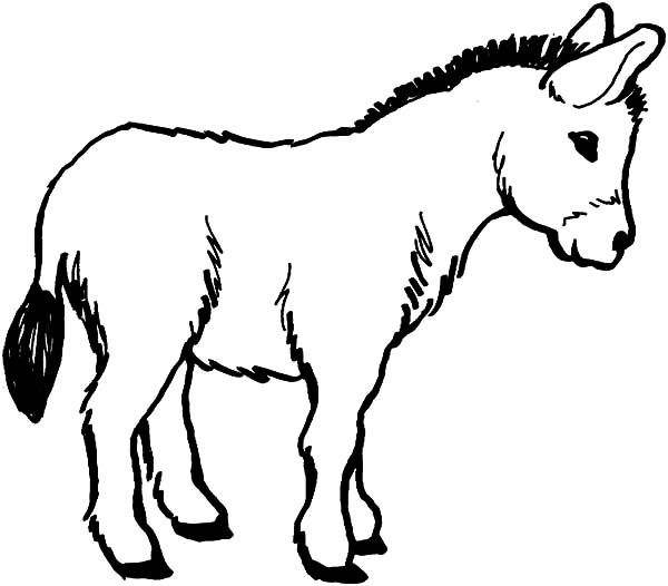 600x526 Donkey Coloring Pages For Children Tags Donkey Colouring Pages