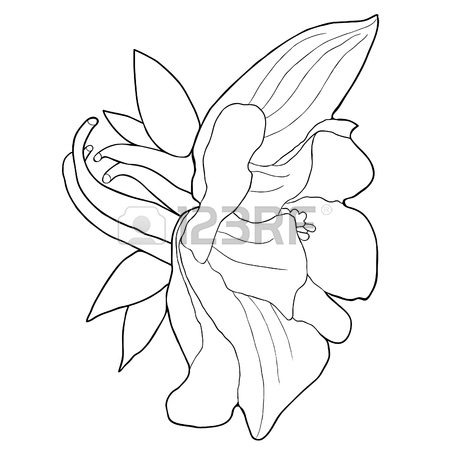 450x450 318 Columbine Flower Stock Illustrations, Cliparts And Royalty