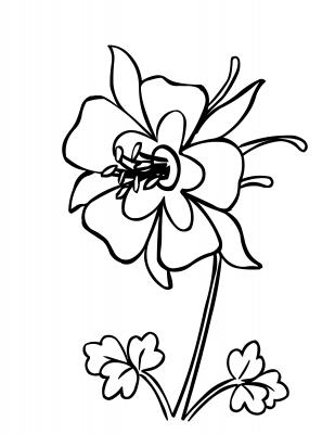 309x400 Columbine Flower Coloring Page Use As Pattern Mosaics