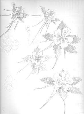 294x400 A Stroke Of Joy New Favorite Flower Columbine