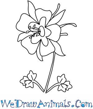 300x350 How To Draw A Columbine Flower