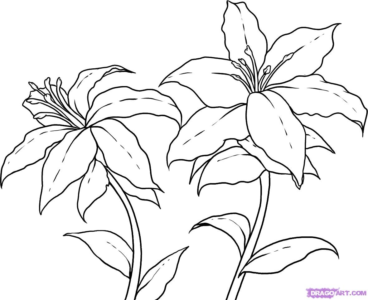 1180x962 Pictures For Drawing Flowers How To Draw Lilies, Step By Step