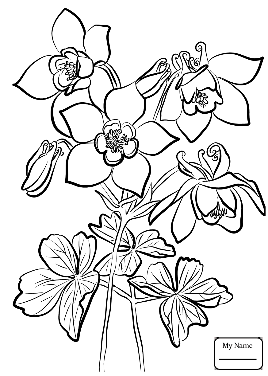 874x1224 Coloring Pages For Kids Fan Columbine Columbine Flowers