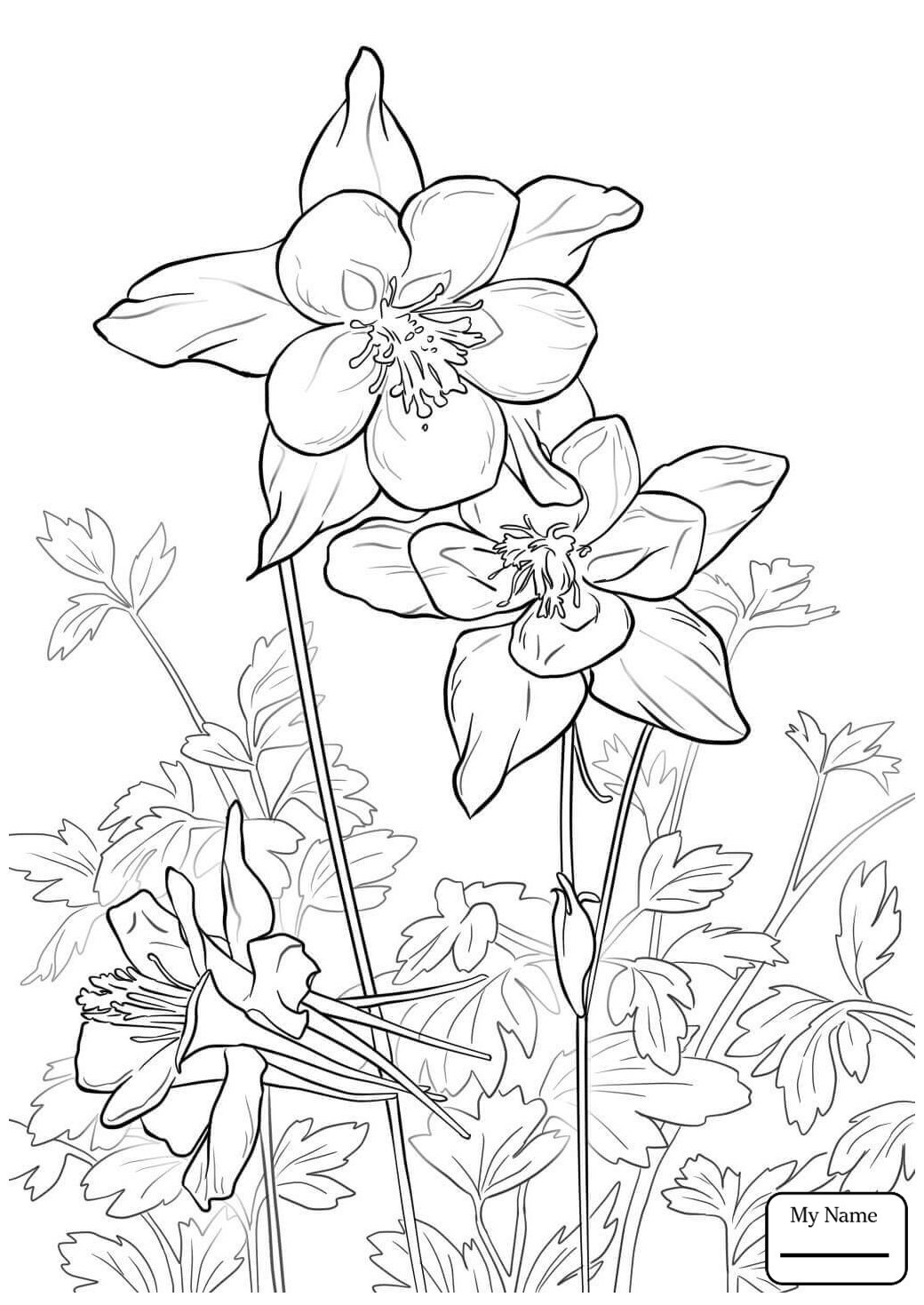 1040x1469 Coloring Pages For Kids Fan Columbine Flowers