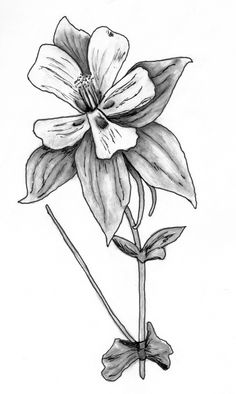 236x394 Line Drawings Of Irises