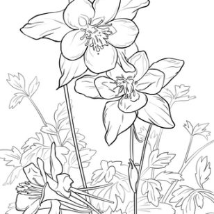 308x308 Awesome Columbine Flower Coloring Page