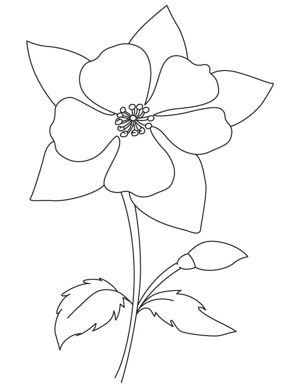 612x792 Blooming Columbine Coloring Page Download Free Blooming