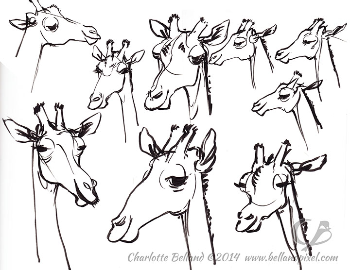 720x556 Zoo Drawings Bellandpixel