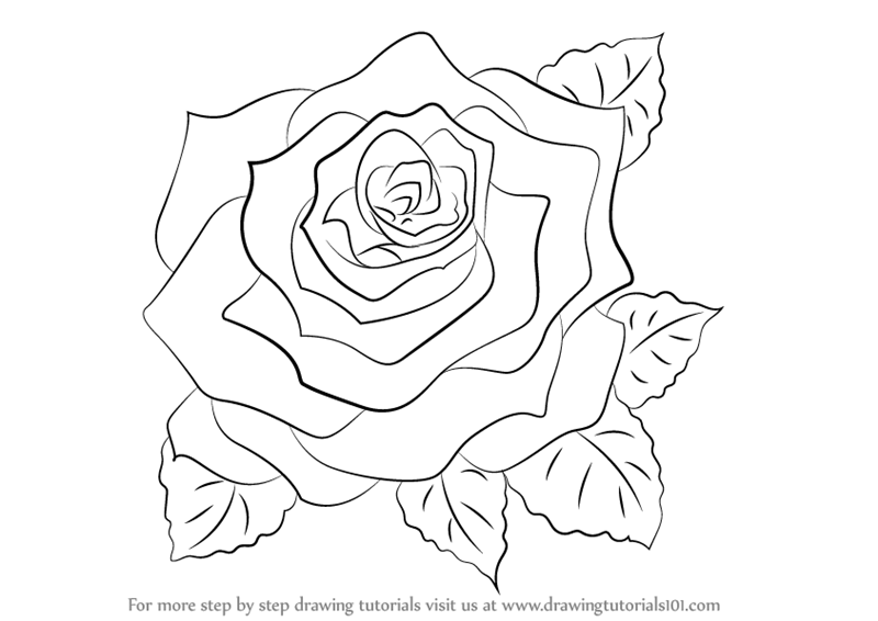 800x566 Learn How To Draw A Rose (Rose) Step By Step Drawing Tutorials