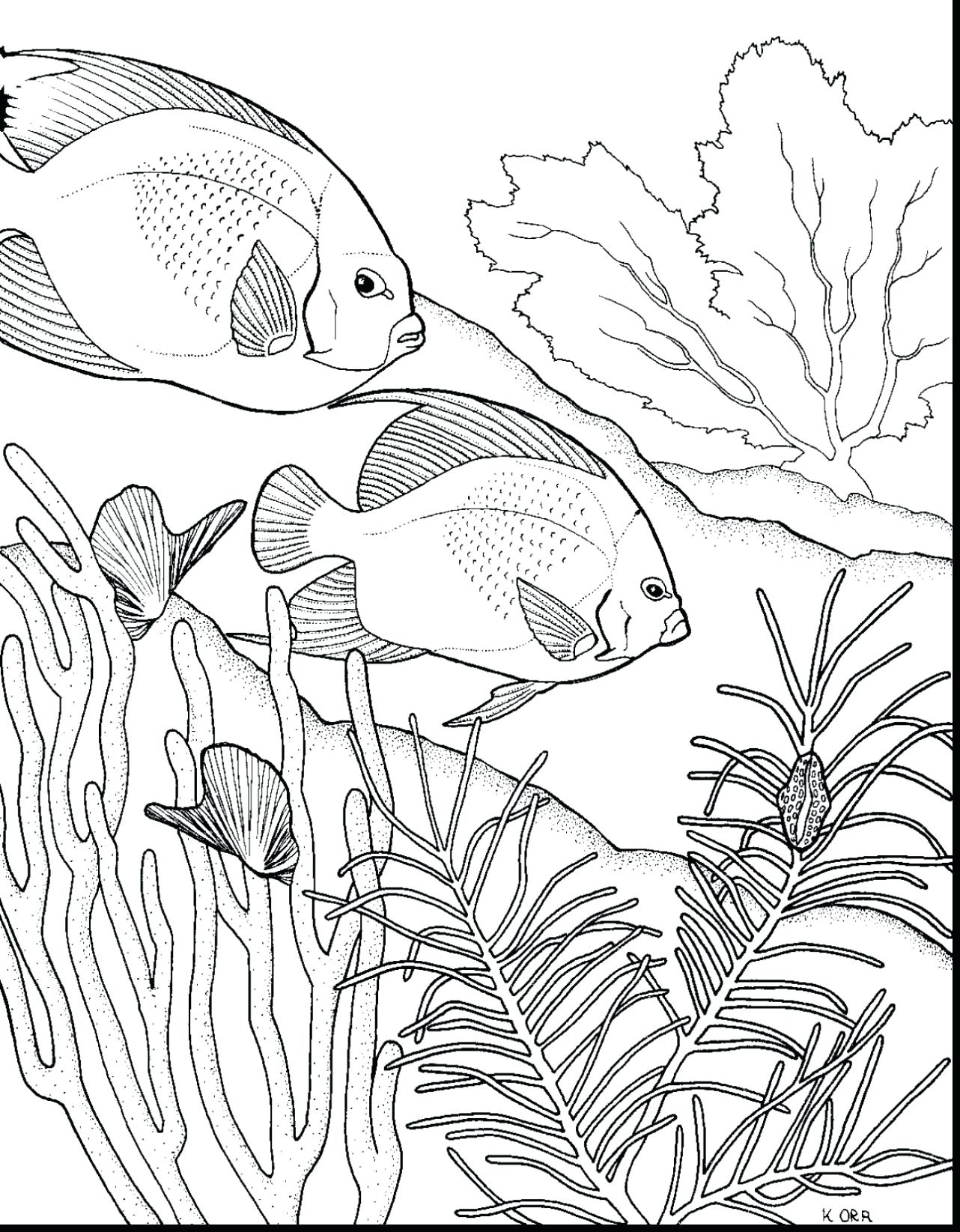 1282x1645 Coloring Coral Reef Coloring Pages Extraordinary Drawing Easy