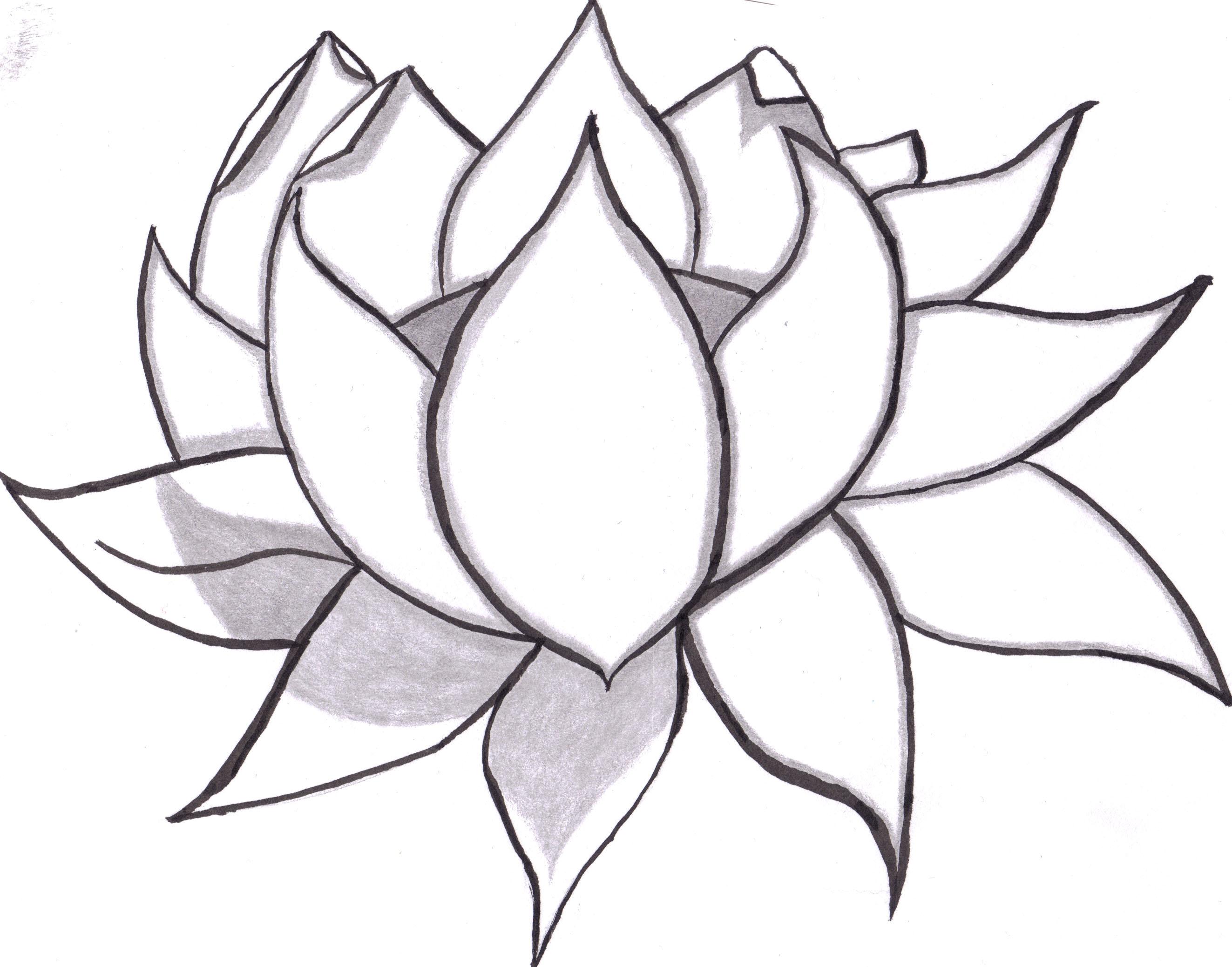 2646x2077 Lotus Flower Pencil Drawing Art