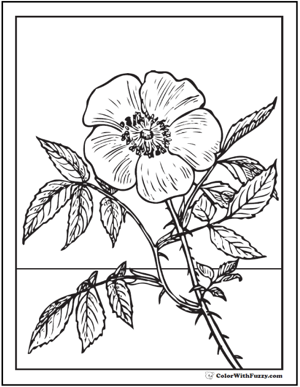 590x762 Rose Coloring Pages Customize Pdf Printables Primroses