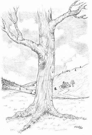 294x434 Image Result For Tree Drawings In Pencil Drawing Competition