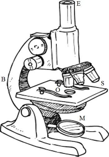 350x500 Compound Microscope