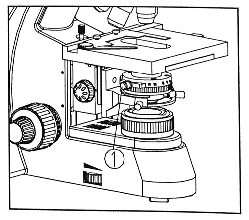 500x443 Darkfield Microscopy On Stereo And Biological Microscopes