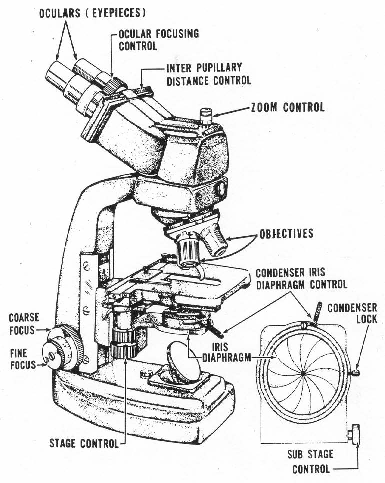 compound light microscope drawing at getdrawings com