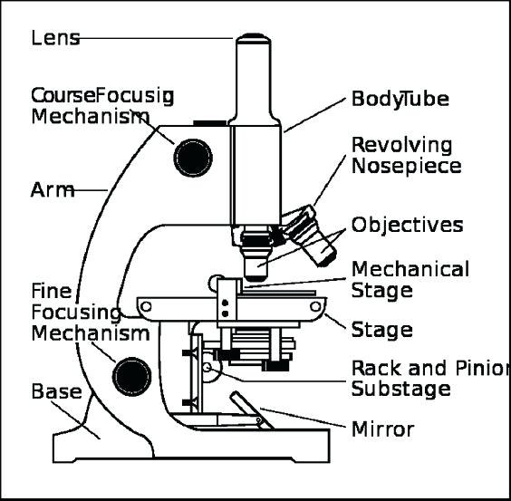 Compound Microscope Drawing At Getdrawings Com Free For