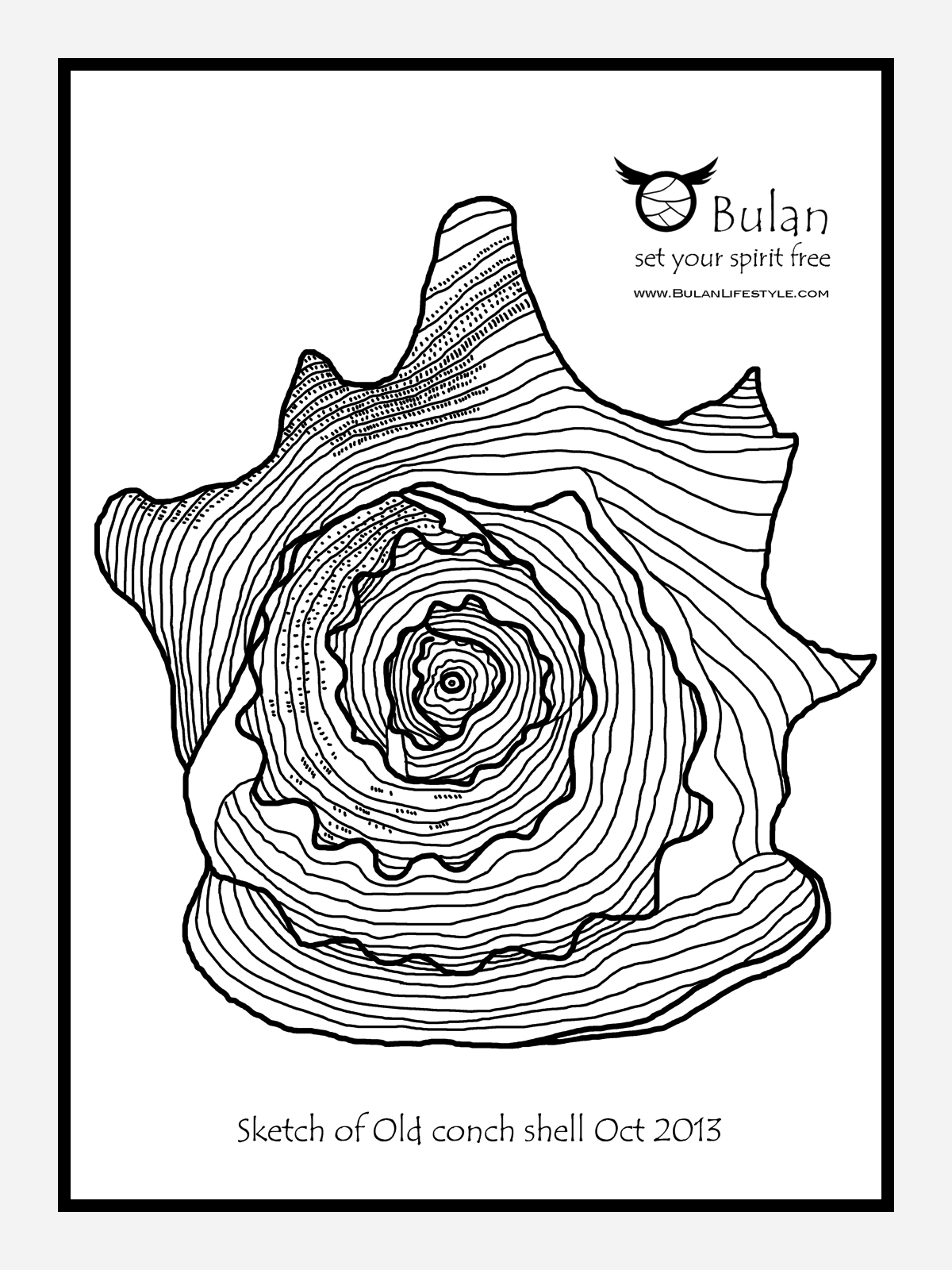 Conch Drawing At Getdrawings Free For Personal Use Conch
