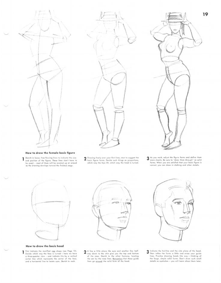 736x940 49 Best Human Body Construction Images On Faces