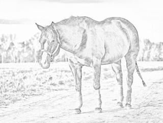 320x241 Convert Jpg To Sketch