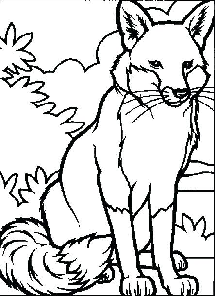 443x609 Cool Animal Coloring Pages Animal Coloring Sheets Detailed Animal