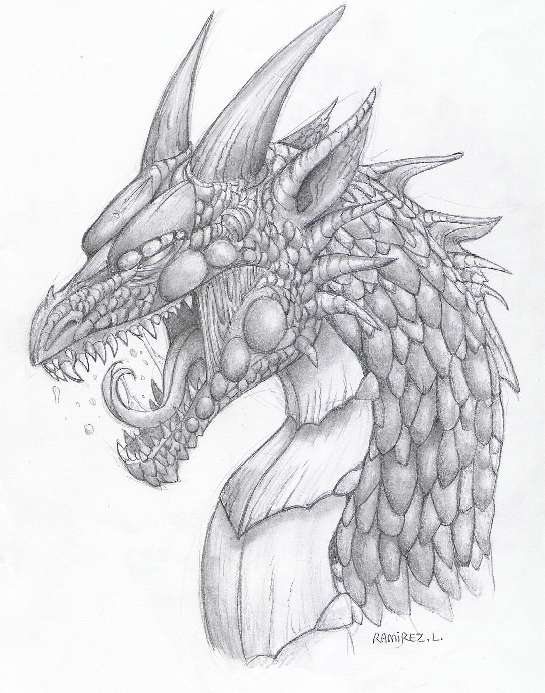 1083x1377 Dragon Sketch By Lauraramirez