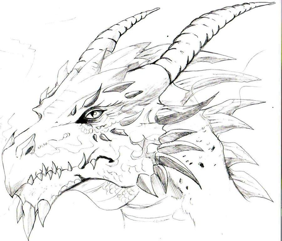 900x770 My 1st Dragon Head By ~trunks24