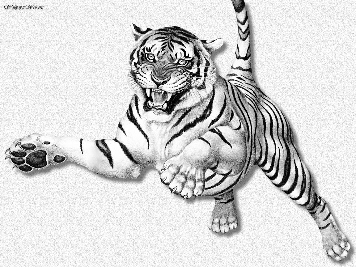 1152x864 Drawing Wallpaper Tiger Leaping Erc (Drawing Amp Painting) Wall