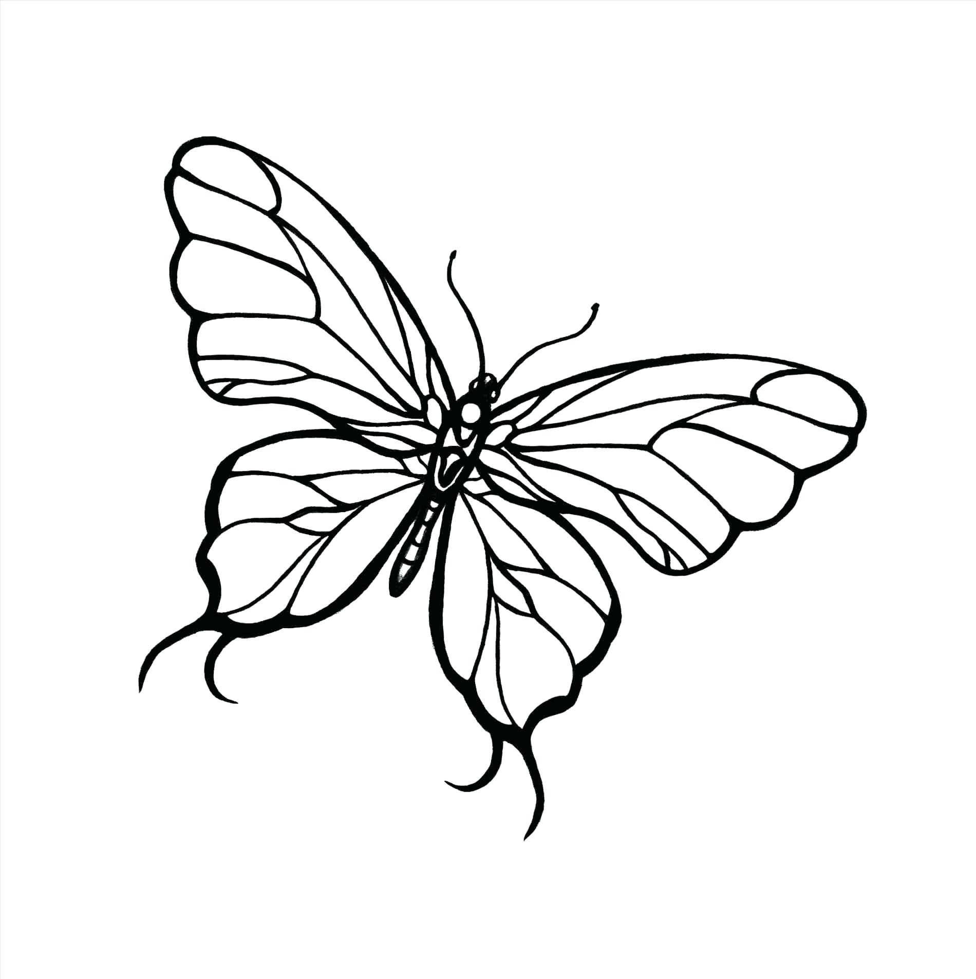 1900x1906 Decoration Cool Designs Drawings Butterfly To Draw Henna Simple