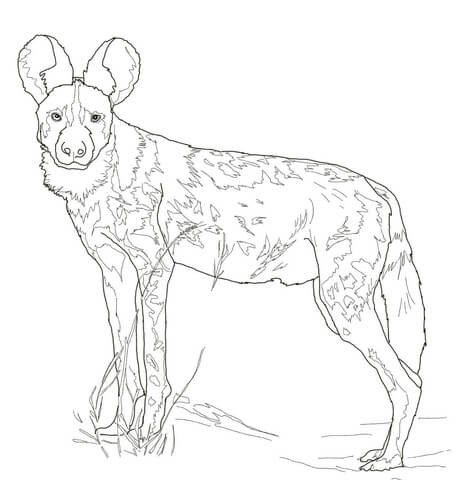 458x480 Drawings Of African Hunting Dogs To Color Hunting Dog Drawings