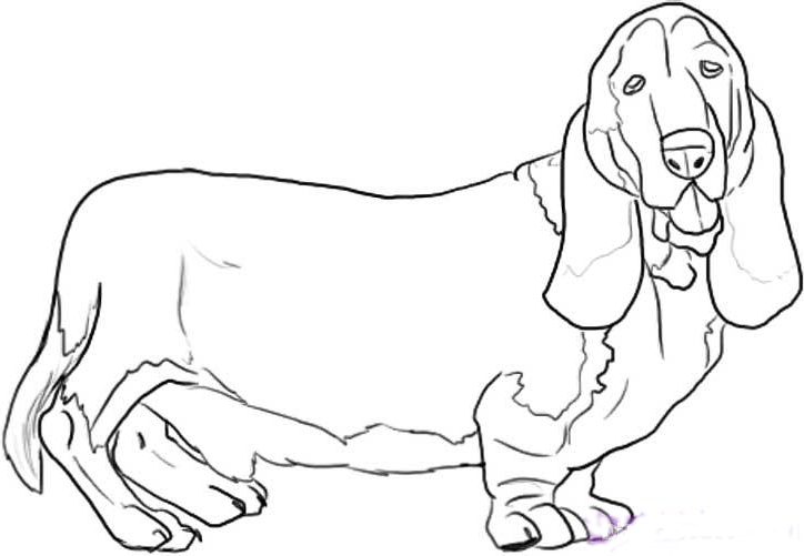 724x501 Basset Hound Coloring Page Basset Hound Coloring Pages Free