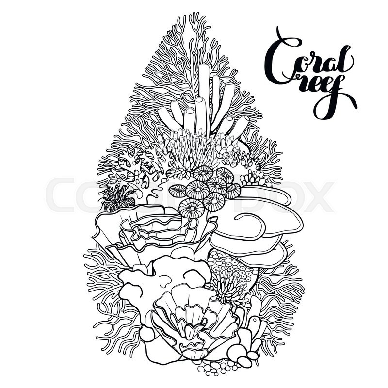 800x800 Coral Reef In Line Art Style. Ocean Plants And Rocks Isolated On