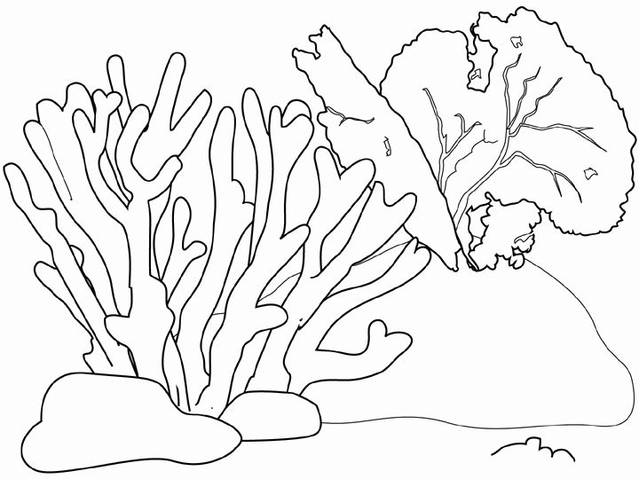 Coral Line Drawing at GetDrawings.com | Free for personal use Coral ...