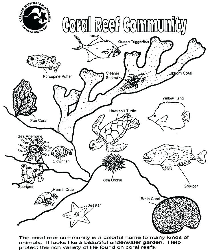 Coral Reef Drawing