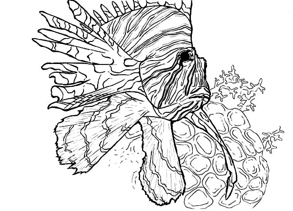 Coral Reef Drawing at GetDrawings.com   Free for personal use Coral ...