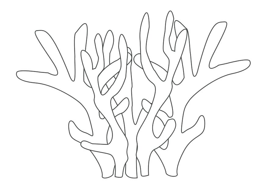 Coral Reef Drawing at GetDrawings.com | Free for personal use Coral ...
