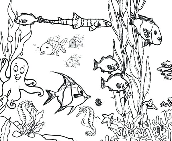 600x490 Pictures Of Fishes To Color Fish Pages The Big And Little