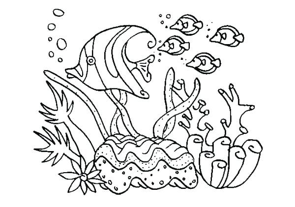 600x422 Sea Animal Coloring Pages Realistic Animal Coloring Pages Animal