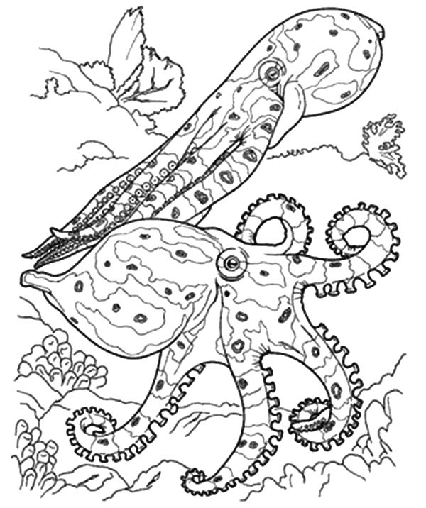 600x716 Coral Reef Fish Predators Coloring Pages