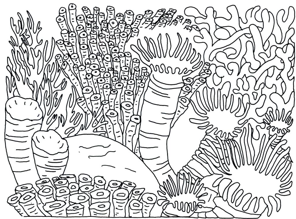 Coral Reefs Drawing