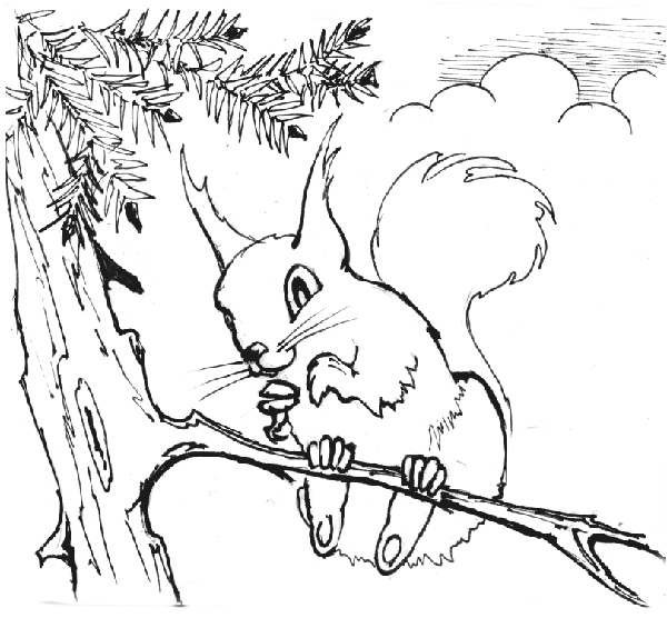 600x556 How To Make A Cheeky Squirrel Using Corel Draw X3