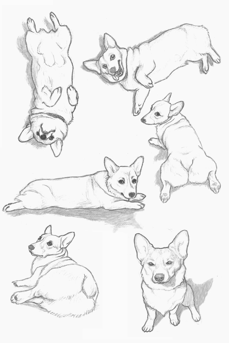 731x1091 Corgi Sketches By Rachels89