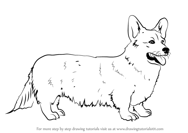 800x566 Learn How To Draw A Welsh Corgi (Dogs) Step By Step Drawing