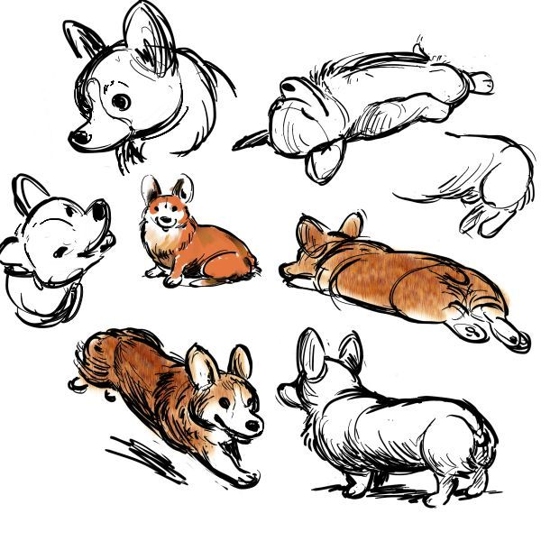 600x600 Mini Corgi Planter Pots Corgi, Doodles And Corgis
