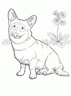236x317 Pembroke Welsh Corgi Alert And Affectionate Pup Home
