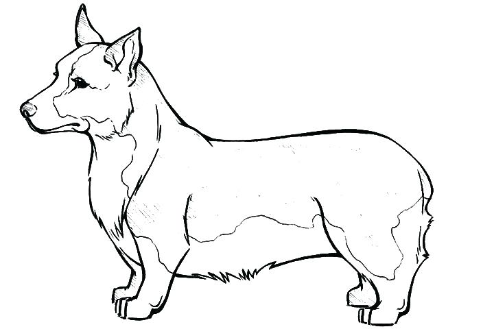 720x480 Corgi Coloring Pages Synthesis.site