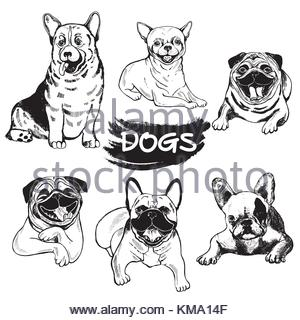 300x320 Hand Drawn Sketch Style Welsh Corgi. Vector Illustration Isolated
