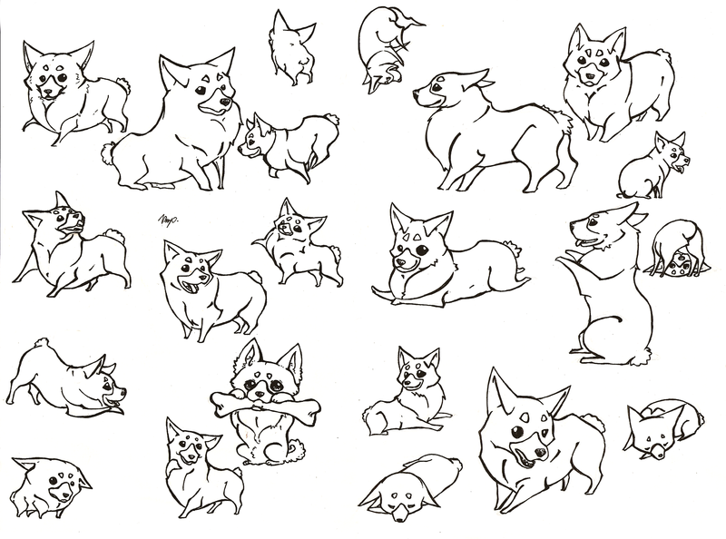 800x594 A Bunch Of Corgis By Kailavmp